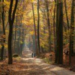 Fietsers op bospad met gouden gloed